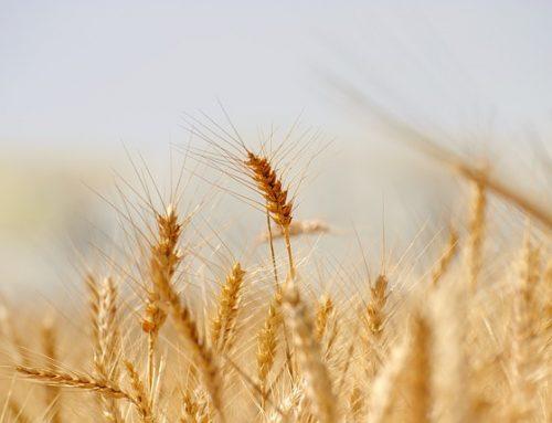 Transfert d'entreprise agricole et relève: une retraite sur la paille?