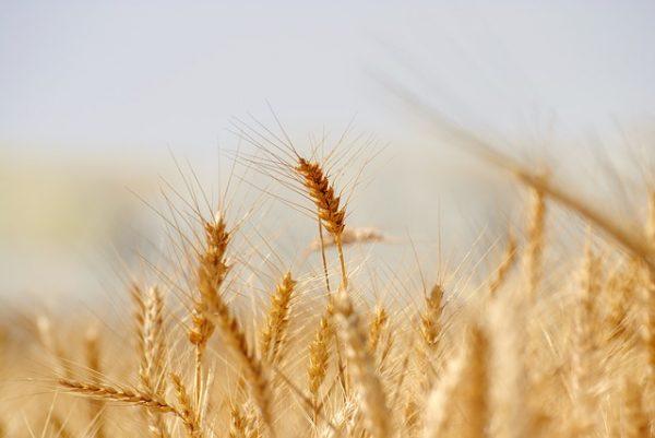 paille_retraite_transfert d'entreprise agricole