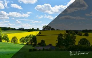 6 stratégies pour éviter la détresse psychologique en agriculture
